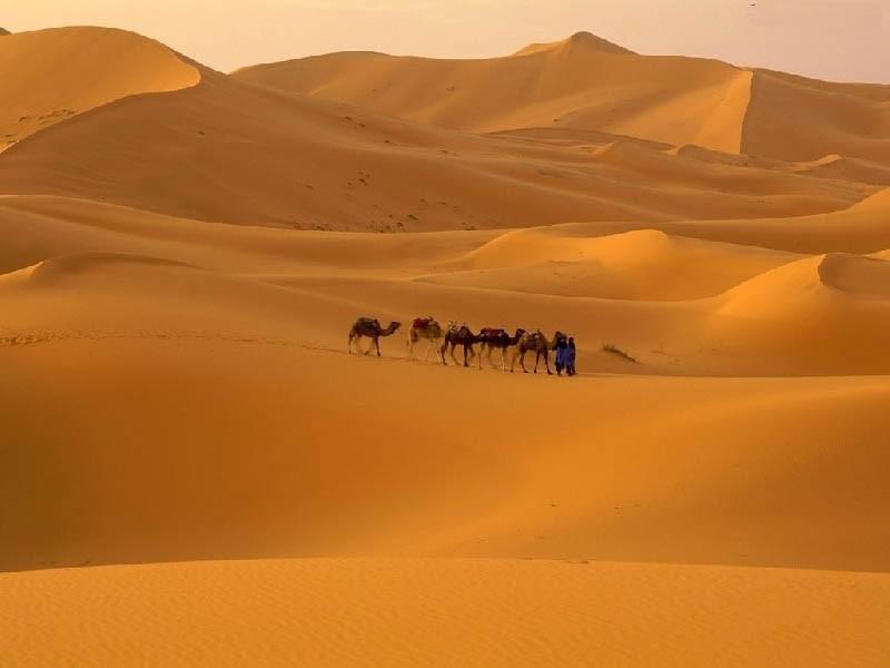 pustynia2_promiennik_podczerwieni_obraz